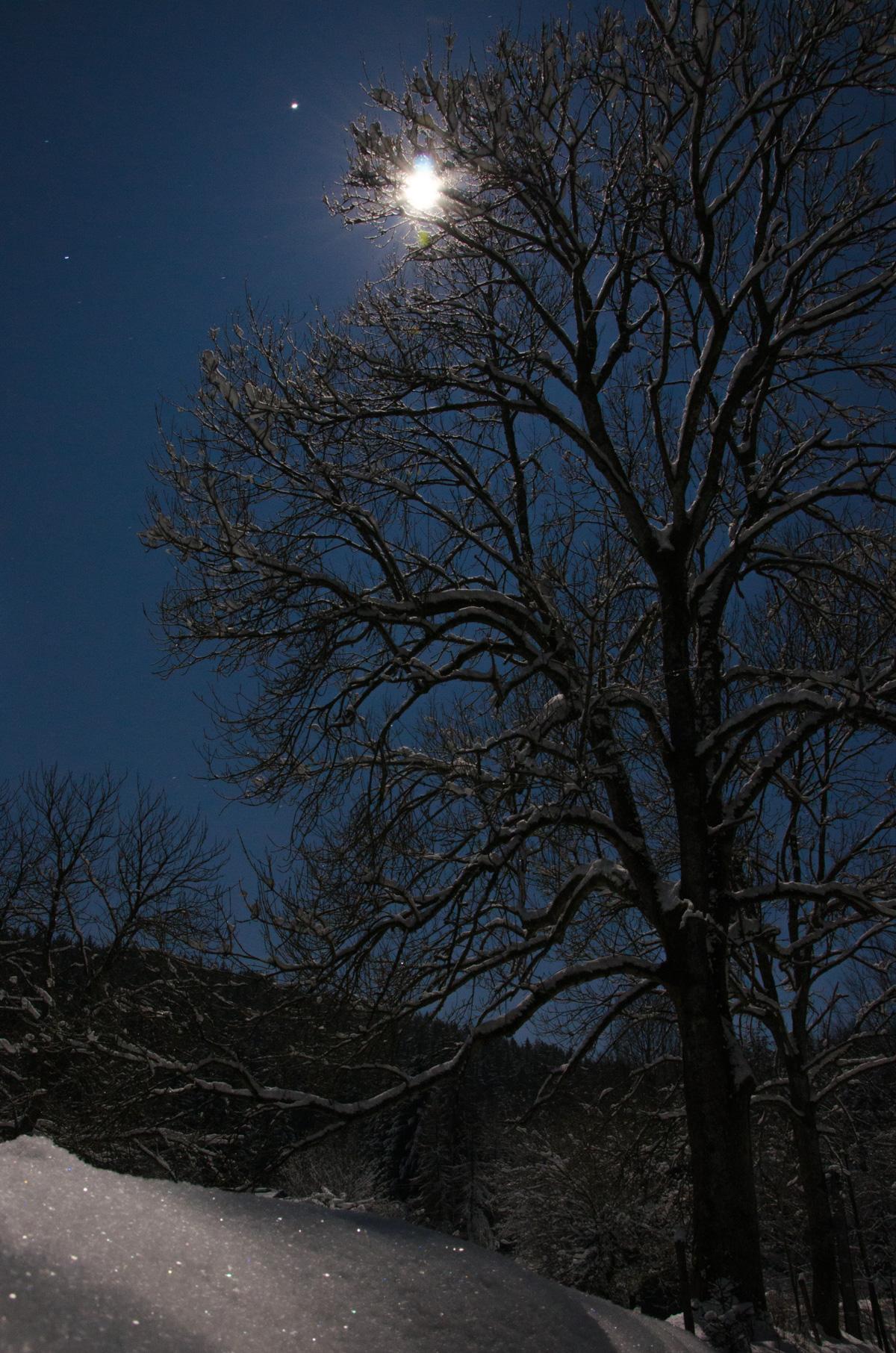 Sieglitzgrund Nacht