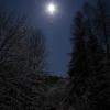 Sieglitzgrund bei Mondlicht