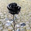 stählerne Rose